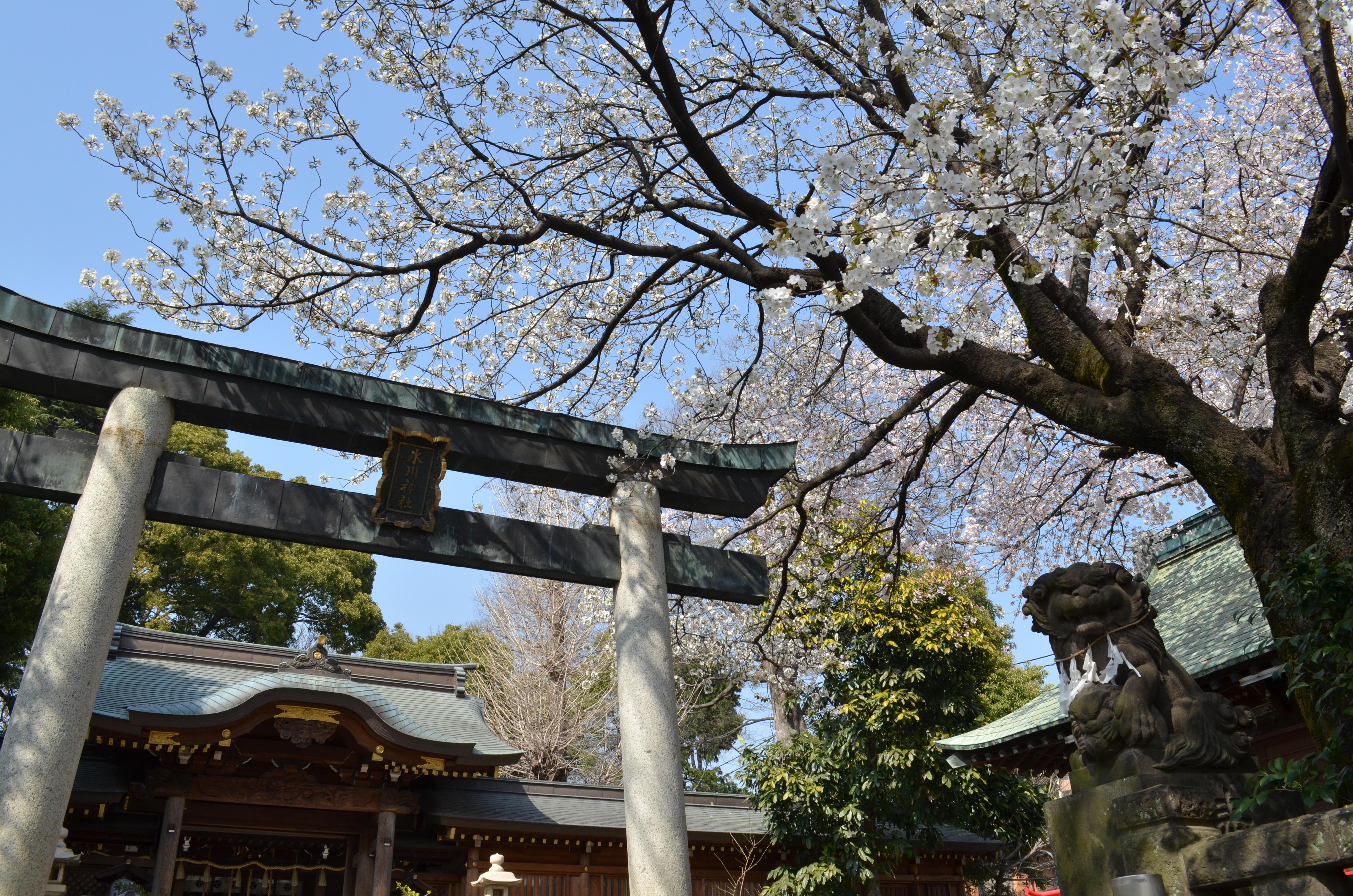 桜を満喫!!食べ歩きデートコース