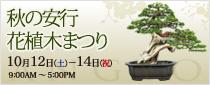 【レポートあり】第76回 秋の安行花植木まつり