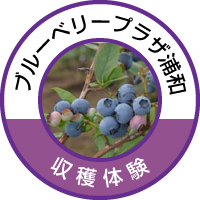 blueberry-plaza-icon.png