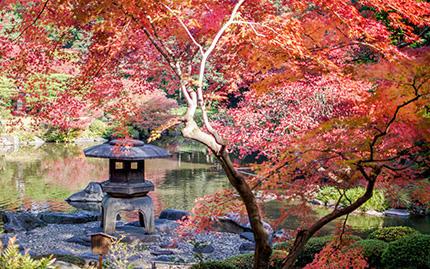 錦秋深まる旧古河庭園