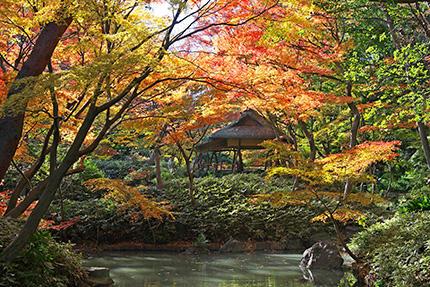 六義園「紅葉と大名庭園ライトアップ」