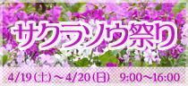 【終了】 サクラソウ祭り ~江戸時代からの伝統品種に出会えます~