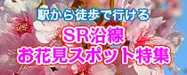 【終了】駅から徒歩で行ける「SRお花見スポット」特集