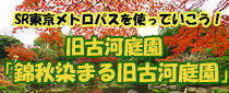SR東京メトロパスを使って 旧古河庭園「錦秋染まる旧古河庭園」に行こう!