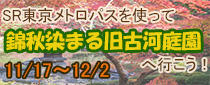 SR東京メトロパスを使って旧古河庭園「錦秋染まる旧古河庭園」に行こう!