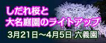 SR 東京メトロパスで行く六義園「しだれ桜と大名庭園のライトアップ」