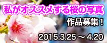 【終了】 「私がおススメする桜の写真」作品募集!