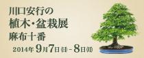 【終了】第5回 川口安行の植木・盆栽展 麻布十番
